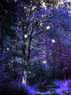 Fairy Forest ~ Miemaria Syhler