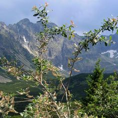 Tatra Mountains, Poland, by Peter and Cecile of ImaginePoland.blogspot.com