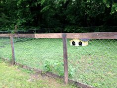 Amazing and Unique Ideas: Fence Planters Spring concrete fence pathways.Fence For Backyard Privacy Screens galvanized metal fence.Fence For Back Yard. Front Yard Fence, Pool Fence, Backyard Fences, Garden Fencing, Backyard Ideas, Pasture Fencing, Garden Paths, Patio Ideas, Garden Beds