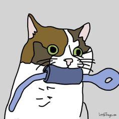Wenn sich deine Katze auf deinen Bauch legt, will sie Dir etwas Unglaubliches sagen. | LikeMag - Social News and Entertainment