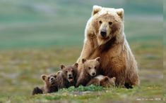 Bears  - buyantlerchandelier.com