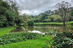 Laguna del jardín botánico de Asunción-Paraguay