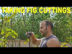 In this video, I discuss when the best time is to take fig cuttings from your trees and order fig cuttings online. Many gardeners begin pruning for cuttings .