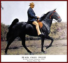 Tennessee Walking horse - Black Angel #391118 home page by Walkers ...