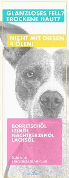Fellpflege beim Hund ❤  Die beste #Fellpflege kommt von innen - auch bei unseren Hunden. Öle sind ein wichtiger Bestandteil der #Hundeernährung - die darin enthaltenen mehrfach gesättigten Fettsäuren sind für unsere Hunde essentiell - also lebenswichtig. Ohne diese Fettsäuren entstehen Mangelerscheinungen. Zeichen dafür können sein: #Haarausfall , trockenes Fell und trockene Haut. Welche Öle vor allem im Fellwechsel für deinen #Hund wichtig sind, zeige ich dir in meinem neuen Blogpost! Puppies, Movie Posters, Dogs, Dog Itching, Toller Dog, Pooch Workout, Film Poster, Doggies, Puppys