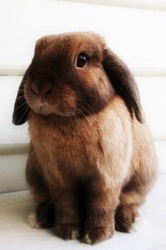 /(>'.'<)Brown Bunny