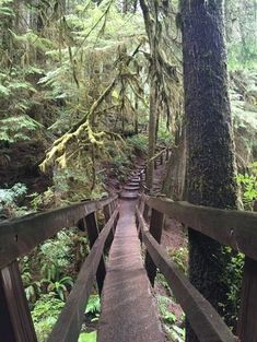 The Ultimate Olympic National Park Itinerary Marymere Falls Trail im olympischen Nationalpark Olympic National Forest, National Park Camping, Us National Parks, Parc National, Us Travel Destinations, Places To Travel, Places To See, Camping Places, Rv Camping