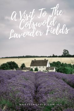 Visiting a lavender field is a quintessential British summertime activity. There aren't any better in the UK than the Cotswold Lavender Field. Places To Travel, Places To Visit, Europe Travel Guide, Travel Guides, Lavender Fields, Lavender Roses, Rose Flowers, Slow Travel, England