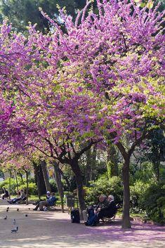 Springtime in Barcelona.