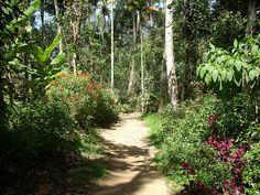 Thekkady - Walking through the spice garden