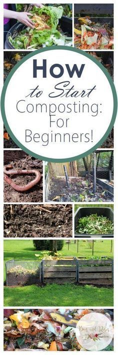 """Among circles of gardeners, the terms """"humus"""" and """"compost"""" gets used interchangeably. While both humus and compost are essential to . Read moreHumus Vs Compost What's The Difference? How To Start Composting, Composting 101, Making Compost, Organic Gardening Tips, Organic Fertilizer, Organic Compost, Urban Gardening, Urban Farming, Indoor Gardening"""