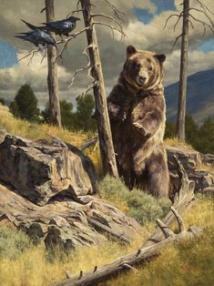Current Work — The Art of Dustin Van Wechel Bear Paintings, Wildlife Paintings, Cool Paintings, Wildlife Art, Bigfoot Photos, Animal Painter, Bear Drawing, Drawing Art, Oil Painting Gallery