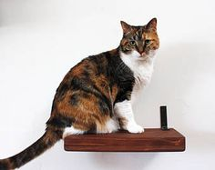 CatastrophiCreations Solid Wood Cat Shelf Handcrafted WallMounted Cat Furniture English Chestnut 12 * Check out the image by visiting the link. (This is an affiliate link) Cat Wall Furniture, Tree Furniture, Sisal, Toy Hammock, Solid Wood Shelves, Wood Shelf, Shelf Wall, Gap, Wood Cat