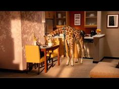 Residence Inn - Giraffe commercial    via youtube. my dad told me about this and said it was the cutest thing! he was right!
