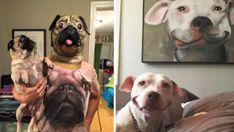 17 Ways To Tell If You're Really A Crazy Dog Person