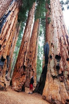 29 Surreal Places In America You Need To Visit Before You Die Sequoia National Park is known for its giant sequoia trees, including the General Sherman Tree, one of the largest in the world. It stands at 275 feet tall and is believed to be roughly ye Sequoia National Park, National Parks Usa, Vacation Destinations, Vacation Spots, Vacations, Vacation Places In Usa, California Destinations, Vacation Ideas, Oh The Places You'll Go