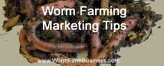 Another worm farming marketing tip Snail Farming, Red Worms, Farm Business, Worm Farm, Worm Composting, Earthworms, Down On The Farm, How To Make Money, Homestead