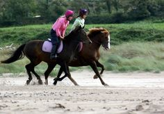Transitions with Lindsay Grice | Horse Journals