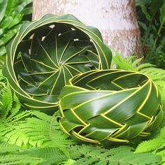 Hana Maui Online: Coconut Palm Woven Basket - woven from green fronds of the… Leave In, Palm Tree Leaves, Palm Trees, Plant Leaves, Leaf Crafts, Diy Crafts, Coconut Leaves, Coconut Bowl, Maui