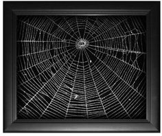 Real spider web art by Emil Fiore