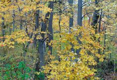 Branch Brook Park, Autumn Colors