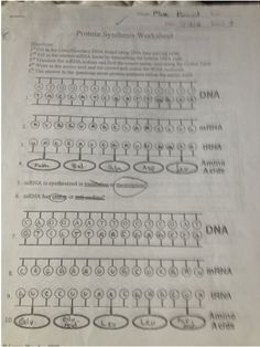 Protein Synthesis Worksheet Exercises KEY.3.png | Genetics ...