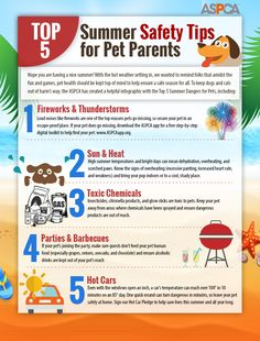 Top 5 Summer Safety Tips for Pet Parents - With the hot weather setting in, we wanted to remind folks that amidst the fun and games, pet health should be kept top of mind to help ensure a safe season for all. Heat Stroke In Dogs, Dog In Heat, Summer Safety Tips, Budget Book, Dog Safety, Online Pet Supplies, Pet Safe, Pet Health, Health Tips