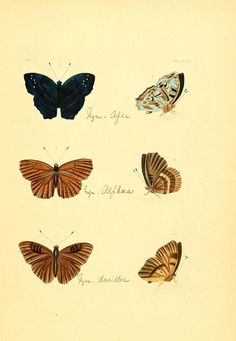 Illustrations of exotic entomology :. London :Henry G. Bohn ...,1837..