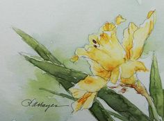 watercolor daffodil painting - Google Search