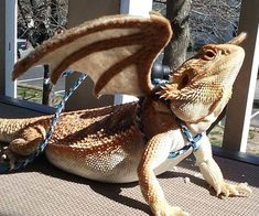 Transform your reptilian friend into a majestic mythical beast using this beared dragon winged leash. This handmade piece provides a secure, comfortable fit and comes with felt wings that create the illusion your small pet is a fierce dragon.