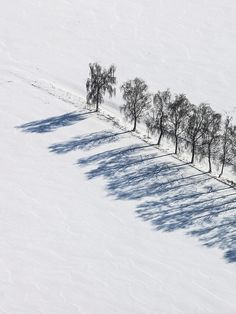 thevuas:    Treeline  by  Aerial Photography