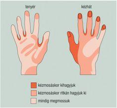 A bőr egészsége – Biológia 11. – - Mozaik Digitális Oktatás Thing 1