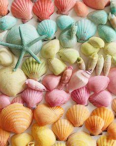 Dyed Seashells