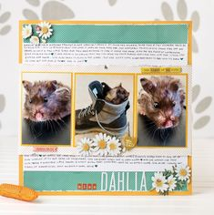 @CSMscrapbooker posted to Instagram: How adorable is this layout designed by Patricia Rodriguez! This layout was part of a PET feature in our Spring 2020 issue of Creative Scrapbooker Magazine.  Do you have your copy yet!  Click on the Smart.bio/csmscrapbooker link in our profile to a direct link to purchase your copy!  Happy Scrapbooking Everyone!  #Spring2020 #PatriciaRodriguez #albertaartists #albertascrapbookers    #csmscrapbooker #creativescrapbookermagzine #creativescrapbooker #createevery Scrapbook Layouts, Scrapbooking, Layout Design, Profile, Magazine, Pets, Spring, Link, Creative