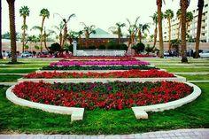 Untitled Eilat