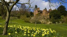 Looking up at the back of the mansion from a bed of daffodils on a sunny day, Chartwell, Kent