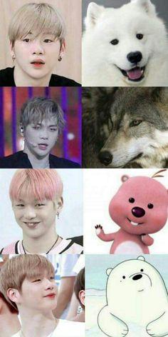 41 Super Ideas Memes Faces Kpop Wanna One Jinyoung, Shinee, Nct, All Meme, Daniel K, Guan Lin, Lai Guanlin, Produce 101 Season 2, Ong Seongwoo