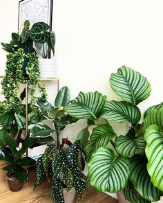 Indoor Vertical Gardening Tips and Ideas Organic gardening isn't always about food to eat. Some people enjoy growing flowers and other forms of plant life as well. You can grow anything bereft of harmful chemicals as long as you're d Green Plants, Potted Plants, Indoor Plants, House Plants Decor, Plant Decor, Plant Aesthetic, Plants Are Friends, Interior Plants, Indoor Garden