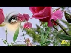 Love Is In your Eyes - ♥ - Gerard Joling
