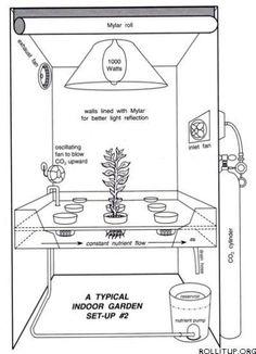 Hydroponics for indoor growing #indoorgardening