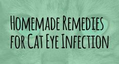Homemade remedies for cat eye infection