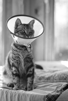 Cone of Shame by wee3beasties, via Flickr