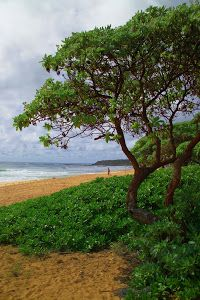 Anahola Beach by Dennis Begnoche - Photo taken of Anahola Beach on Island of Kauai. The Garden Island. Click on the image to enlarge.