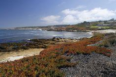 Scenic coast along 17-Mile Drive, Montery Peninsula, California