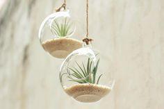 Hot vente 8cm 10cm et 12cm ronde suspendue verre vase fait main succulente Terrarium Kit décoration cadeau d'hôtesse