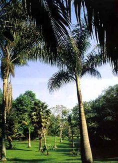 Jardín Botánico Foto: iSecretaría de Turismo del Estado de Veracruz/i
