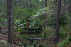 You saved to Time Began in a Garden @NorthCarolina #NorthCarolina @SaraPDukeGarden #SaraPDukeGarden