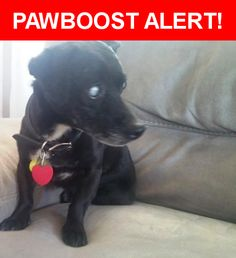 Is this your lost pet? Found in Cedar Park, TX 78613. Please spread the word so we can find the owner!  Small black mixed-breed. The dog is totally blind.  Nearest Address: Cedar Park Town Center, Cedar Park, TX
