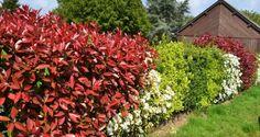 żywopłot liściasty fot. Julia Casado Pixabay