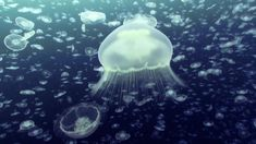 Open Ocean: 10 Hours of Relaxing Oceanscapes | BBC Earth